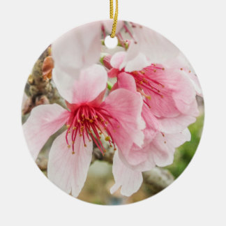 Pink Cherry Blossoms - Ceramic Ornament