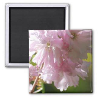 Pink Cherry Blossoms Magnet Magnets