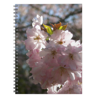 Pink cherry blossoms note books
