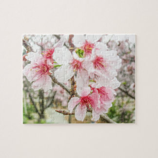 Pink Cherry Blossoms - Puzzle