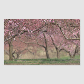 Pink Cherry Blossoms Sticker