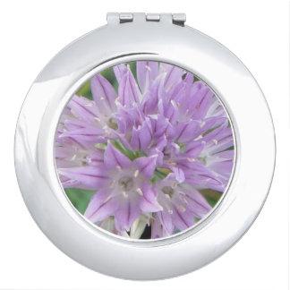Pink Chive Flowers Allium Schoenoprasum Compact Mirrors