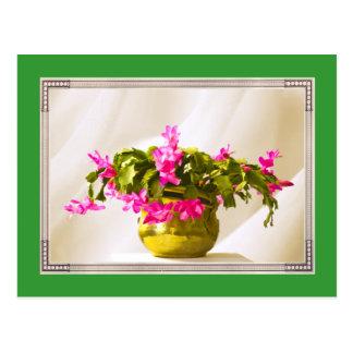 Pink Christmas Cactus Portrait Postcard