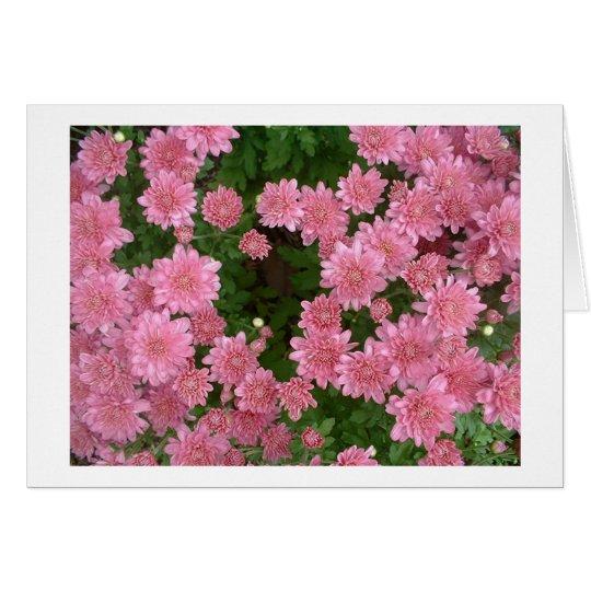 Pink Chrysanthemums Card