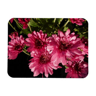 Pink Chrysanthemums Magnet