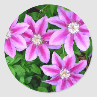 Pink Clematis  and wild Oregano Classic Round Sticker