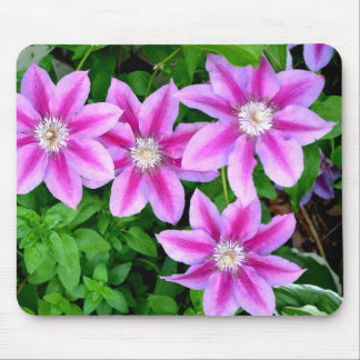 Pink Clematis  and wild Oregano Mouse Pad