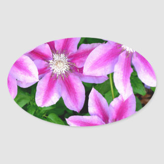 Pink Clematis  and wild Oregano Oval Sticker