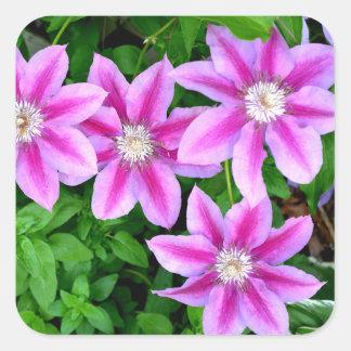 Pink Clematis  and wild Oregano Square Sticker