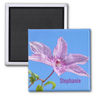 Pink Clematis Blossom Magnet