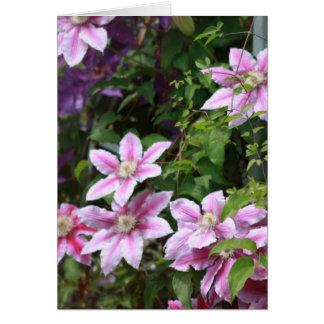 Pink Clematis Greeting Card