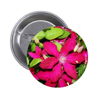 Pink Clematis Pinback Button