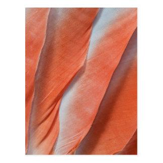 Pink Cockatoo Feather Design Postcard