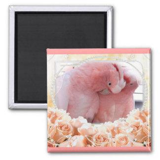 Pink Cockatoos Magnet