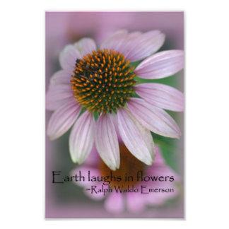 Pink coneflower macro photography print nature art art photo