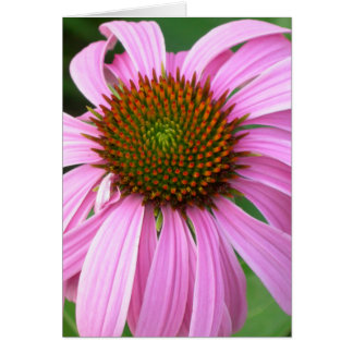 Pink Coneflower You Amaze Me Card
