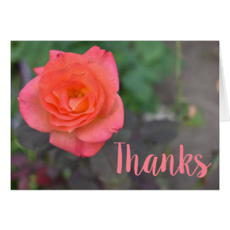 Pink Coral Rose Flower Photography Thank You Card