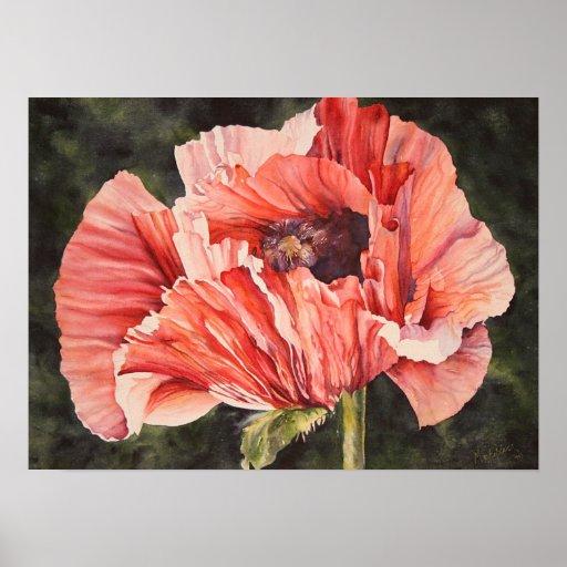 Pink Corn Poppy Botanical Poster Canvas Print