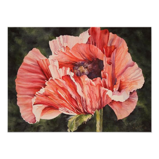 Pink Corn Poppy Botanical Poster Canvas Print