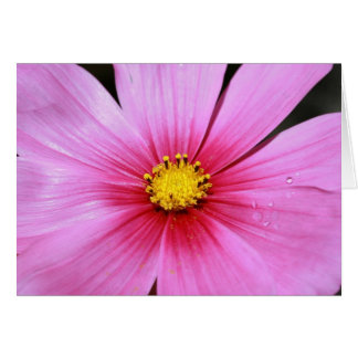 Pink Cosmo Blank Card