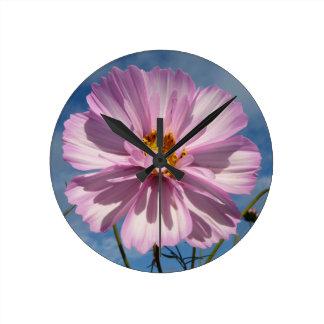 Pink Cosmos flower against blue sky Clocks