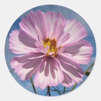 Pink Cosmos flower against blue sky Round Sticker