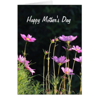 Pink Cosmos in the Morning Sun Mother's Day Card