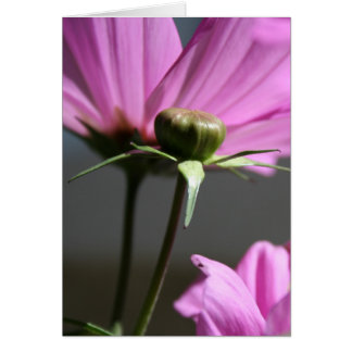 Pink Cosmos in the Sun 3 greeting Card