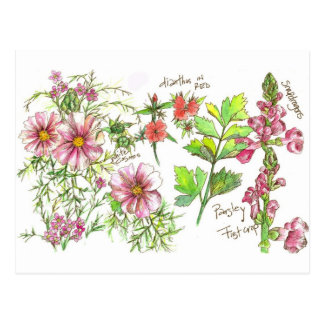 Pink Cosmos Snapdragon Flowers Sketch Postcard