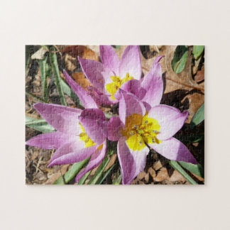 Pink Crocuses Early Spring Floral Jigsaw Puzzle