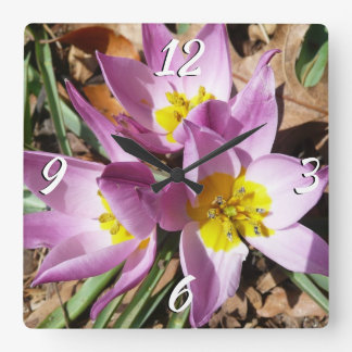 Pink Crocuses Early Spring Floral Square Wall Clock