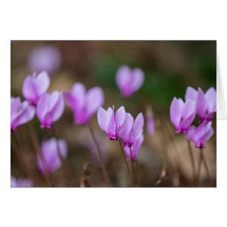 Pink Cyclamen card