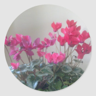Pink Cyclamen Flowers Sticker