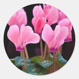 Pink Cyclamen Round Sticker