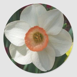 Pink Daffodil Beautiful Spring Flower Classic Round Sticker