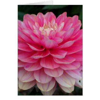 Pink Dahlia Blank Card