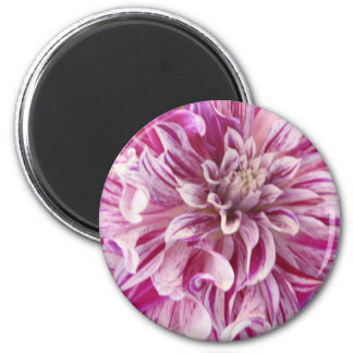 Pink Dahlia Blossom Round Magnet Fridge Magnet