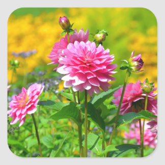 Pink dahlia flower garden square sticker