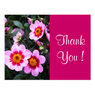 Pink dahlia flowers postcard