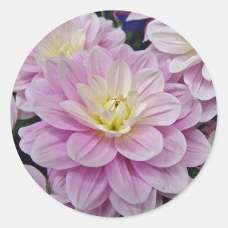 Pink Dahlias Classic Round Sticker