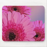 Pink daisies mouse pads