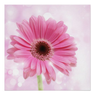 Pink daisy canvas poster