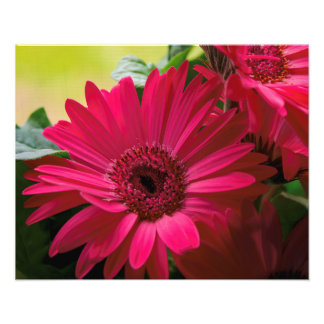 Pink Daisy Details Photo Print