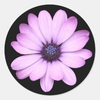 Pink daisy type flower classic round sticker