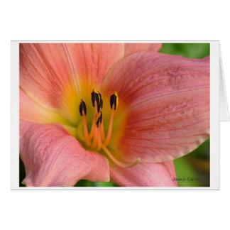 Pink Daylily Card