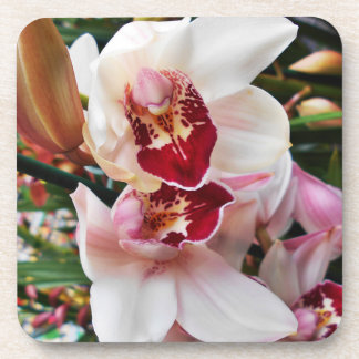 Pink Dendrobium Orchids Coaster