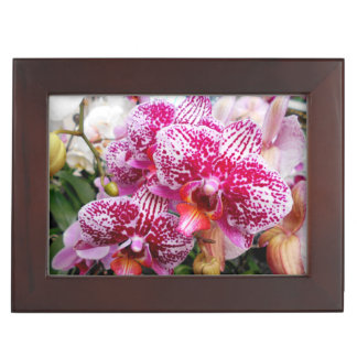 Pink Dendrobium Orchids Keepsake Box