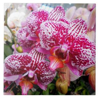 Pink Dendrobium Orchids Tile