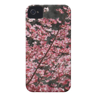 Pink Dogwood Blooms iPhone 4 Case-Mate Case