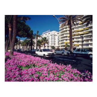 Pink Elegant Boulevard de Croisette, Cannes flower Postcard